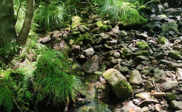 Программа сохранения Дальневосточных лесов