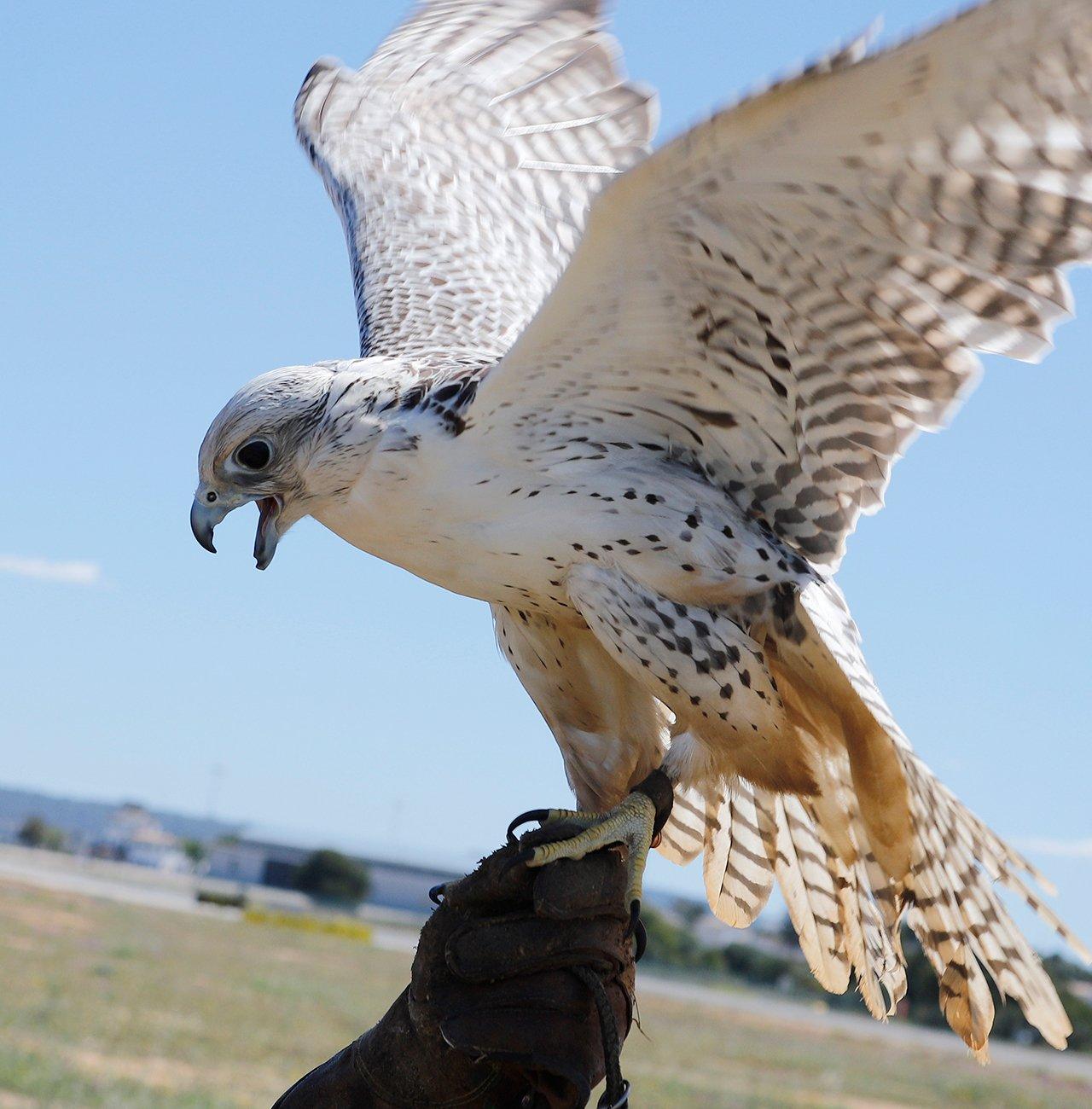 Издан полный определитель птиц Камчатки и Командорских островов: в справочник вошло более 300 видов