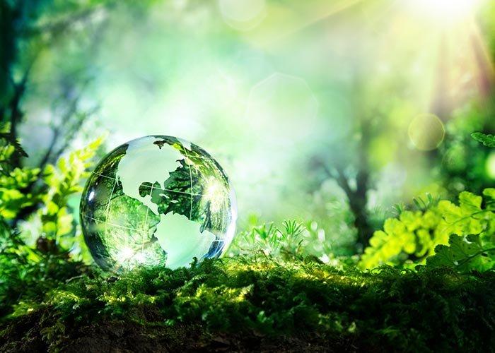 Дальневосточная Экологическая комиссия стала членом Global Waste Cleaning Network. GWCN